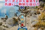 ポケモンGO:第七回コミュニティデイはゼニガメ!色違い・特別な技は?