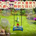 PokemonGOTikorita